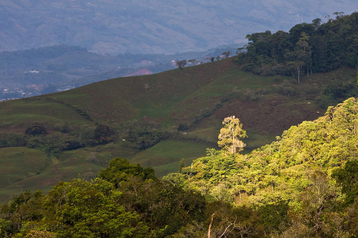 Warm morning light on pasture lands near the Las Nubes Reserve, Skutch Corridor, Costa Rica