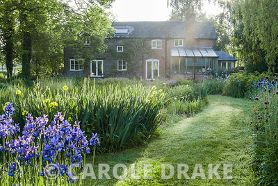 Mill house surrounded by clumps of vibrantly coloured irises catching early morning sun. Westonbury Mill Water Garden, Pembri...