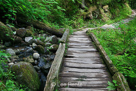 Boardwalk along Trail to Lake Twentytwo in the Cascade Mountains