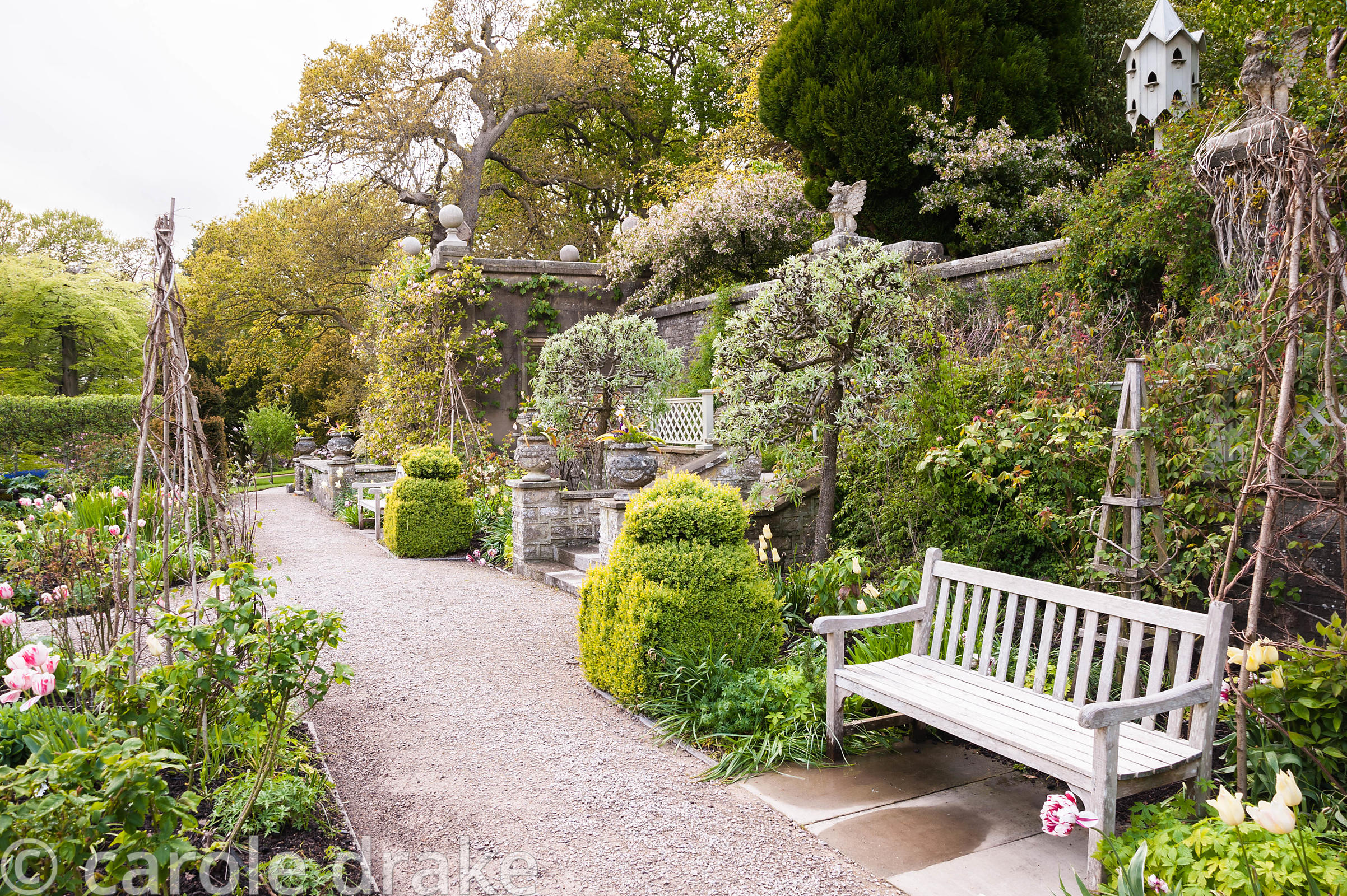 The Sunken Garden features clipped silver pears. Holker Hall, Grange over Sands, Cumbria, UK