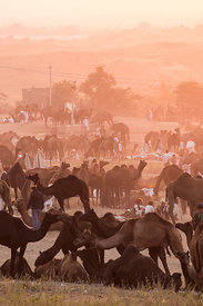 Wide view of the Pushkar camel fair at sunset, Pushkar, Rajasthan, India