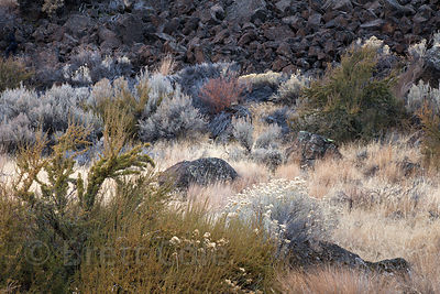 Beautiful mixed grasses and shrubs in winter, Tule Lake NWR, California