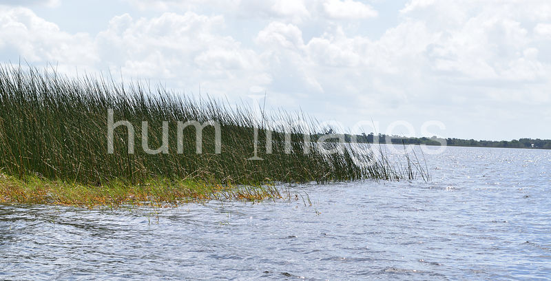 Nature Stock Photos: Small Lake and Cat Tails