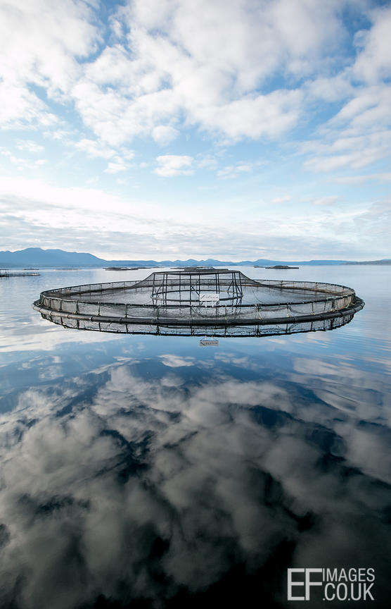 Cloud Reflections And A Fish Farm In The Huon River, West Tassie, Australia