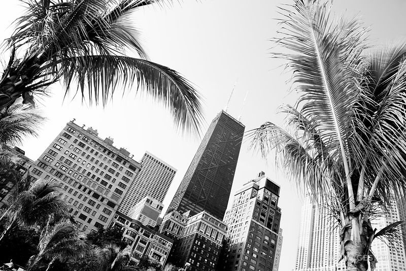 PALM TREES ON OAK STREET BEACH AT THE LAKEFRONT IN DOWNTOWN CHICAGO BLACK AND WHITE