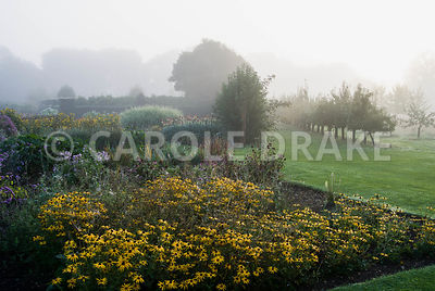Rudbeckia fulgida var. deamii at the corner of a bed with lines of fruit trees stretching into the landscape beyond. Waterper...