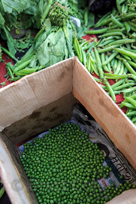 Mutter (peas) fresh from the farm, Pushkar, Rajasthan, India