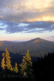 A stretch of forested wilderness in the Goat Rocks Wilderness, Washington Cascades.