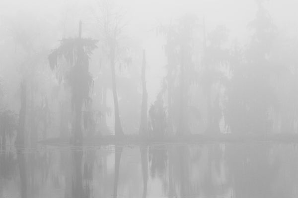 Fog at Lake Martin