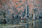 Caddo Fall
