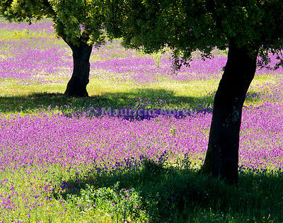 Spring on the Alentejo plain, Portugal