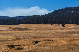 Grasslands of Valle Grande in Valles Caldera National Preserve