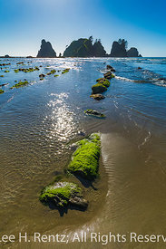 Wet Sand and Rocks at Low Tide on Shi Shi Beach in Olympic National Park