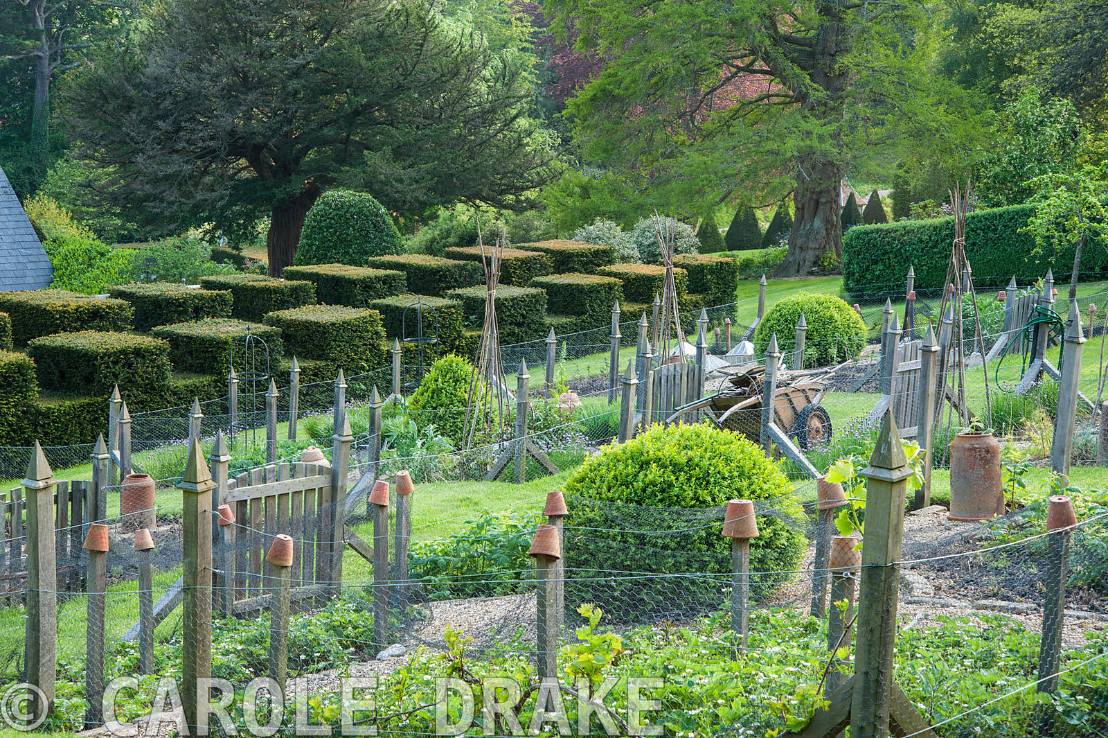 Formal vegetable garden with castellated yew walk below. The Old Rectory, Netherbury, Dorset, UK