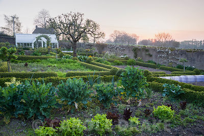 At the centre of the kitchen garden is a mature apple tree surrounded by box edged beds, trained fruit and ornamental borders...