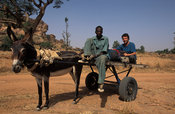 Backpacker on a donkey cart, Dogon country, Mali