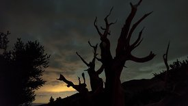 Close Up: Speeding Clouds & a Moonstrike Revealing the Silouhetted Limbs of a Twisted Bristlecone