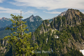 Nearby peaks in the Cascade Mountains viewed from Mt. Forgotten Meadows with an Alaska Yellow Cedar (aka Nootka Cypress) (Cal...