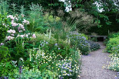 Herbaceous borders at Cothay Manor, Somerset, containing repeated clumps of purple sage, Anthemis punctata sp cupaniana, Gera...