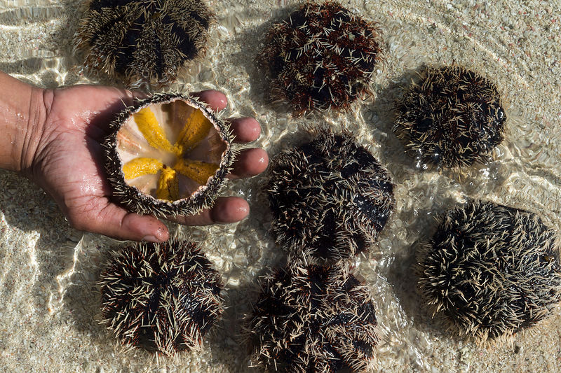 Vik (guest experience manager) with sea urchins, LUX Le More, Le Morne, Mauritius.