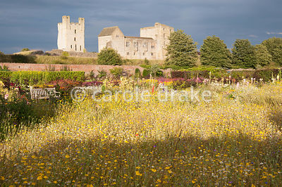 Imposing backdrop of Helmsley Castle with annual meadow planting in the foreground and hot herbaceous borders behind. Helmsle...