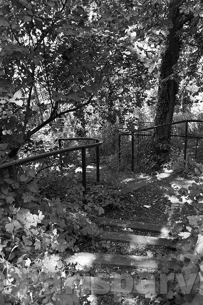 Parisparvu Jardin Sauvage Saint Vincent Paris 18th