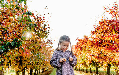 Younger Nordic girl and pear trees 7