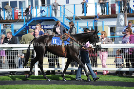 The Newton Abbot Races Novices Hunters Steeple Chase (Class 6)