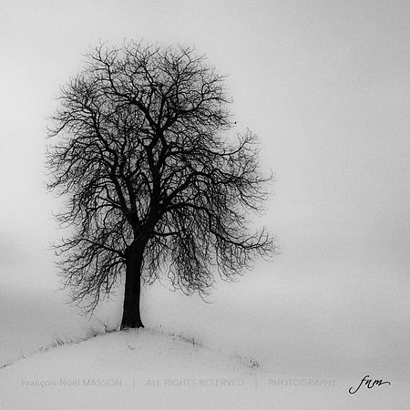 Arbre_-_copie