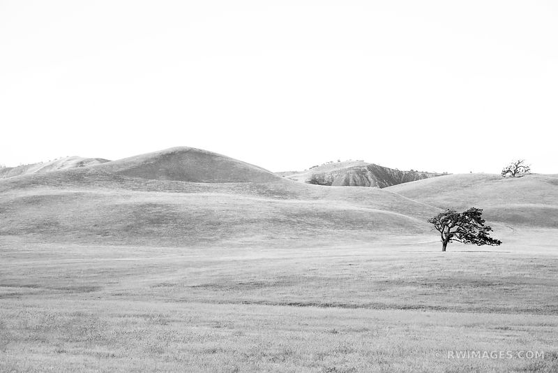 OAK AND HILLS CENTRAL CALIFORNIA WINE COUNTRY BLACK AND WHITE