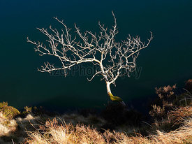 Abstract image of a bare tree in winter on a sunny day with the blue water of Bowscale Tarn behind it.
