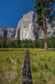Burned Log Showing Evidence of Fire in Yosemite Valley