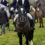 The Cottesmore Hunt at Pickworth 3/1
