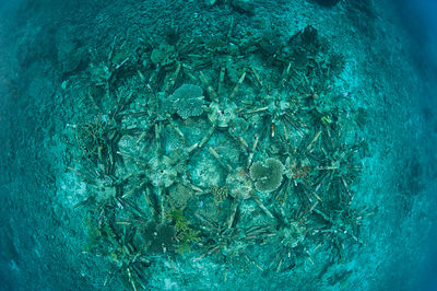 Artificial reef using ceramic snowflakes help rejuvenate the dead coral reefs of El Nido. The 1998 El Nino caused a massive s...