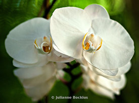 Orchid Symmetry