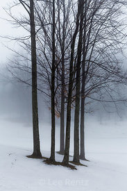 Trees in Fog in Central Michigan