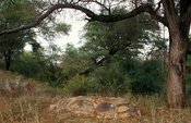 Elsa's grave. Elsa was a famous lioness released back into the wild by the Adamsons. Meru National Park, Kenya