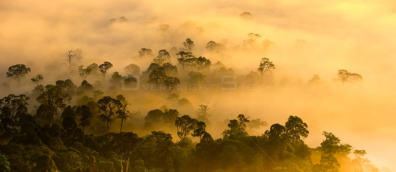 Mist hanging over lowland rainforest just after sunrise in the heart of Maliau Basin - Sabah's 'Lost World'. Lobah Camp, Mali...