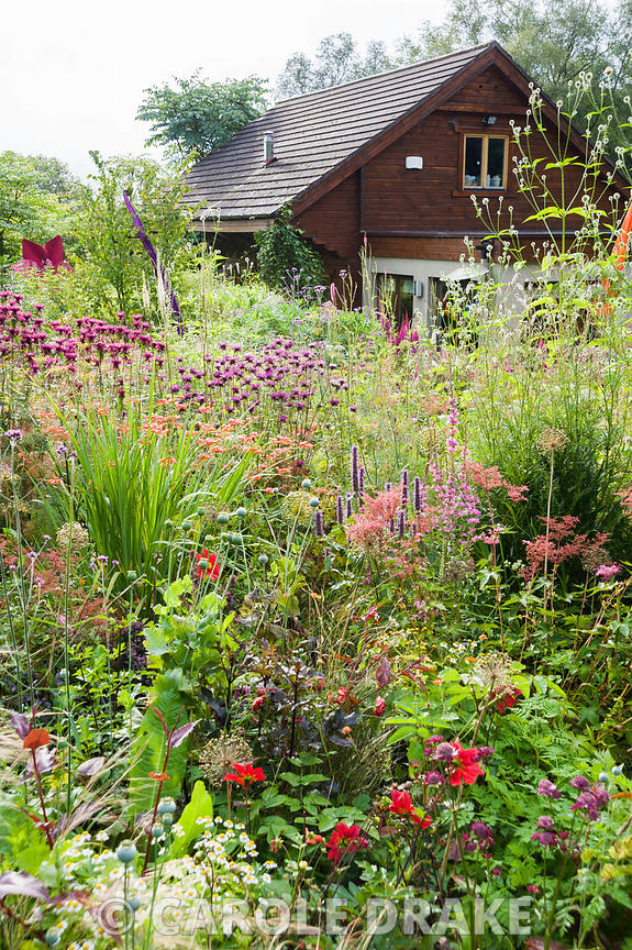 Bed near the house full of pink, red, purple and magenta herbaceous perennials and annuals including agastache, Filipendula p...