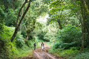 People walking through the forest, Amber Mountain National Park, Madagascar
