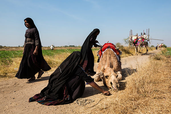 Rabari Women Securing a Load on the Back of a Camel