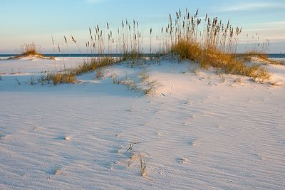 Sea Oats and Sand Dunes