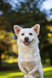 Smiling White Mixed Breed Dog with Bow Legs and big ears
