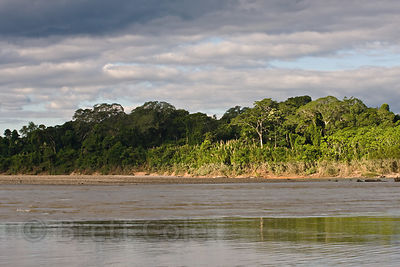 Attractive light on the Tambopata River, Peruvian Amazon