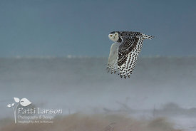 Sightseeing Snowy Owl