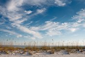 Sea Oats and Big Sky