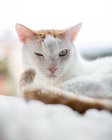 Close-up of Orange and White Cat with One Eye Closed