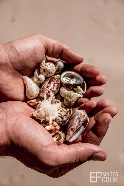 He Holds Sea Shells On The Sea Shore