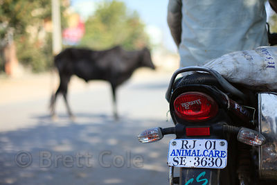A rescue motorcycle for the NGO Tree of Life for Animals responds to a call about an injured cow in Ajmer, Rajasthan, India