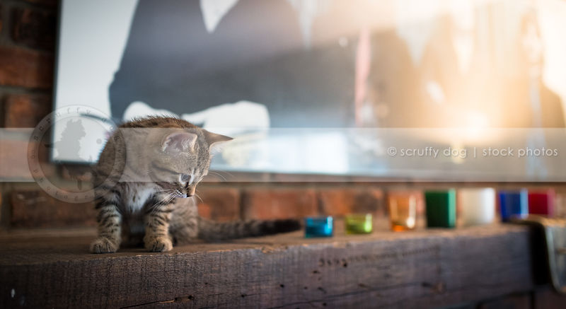 brown tabby kitten sitting on fireplace mantle indoors at home